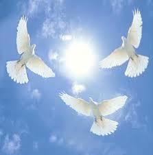 Exaltation of doves
