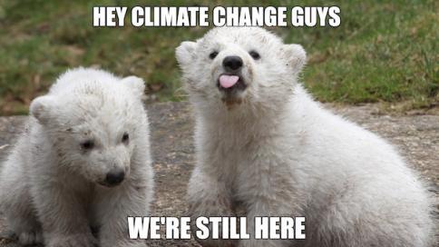 climatechangepolarbears